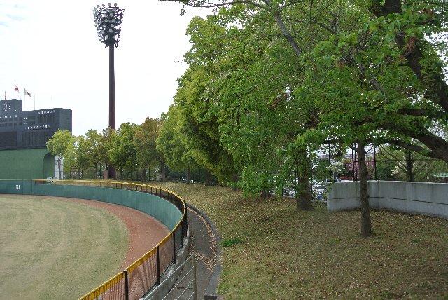 適度な傾斜があり、上段では木立が木陰を作ってくれるため、観戦環境は良いと思います。