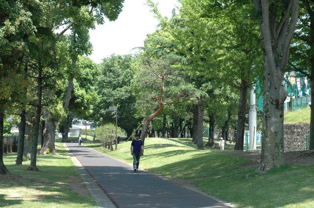 公園の南側から球場を目指す時、この散歩道を歩いて球場入口に向かう形となります。
