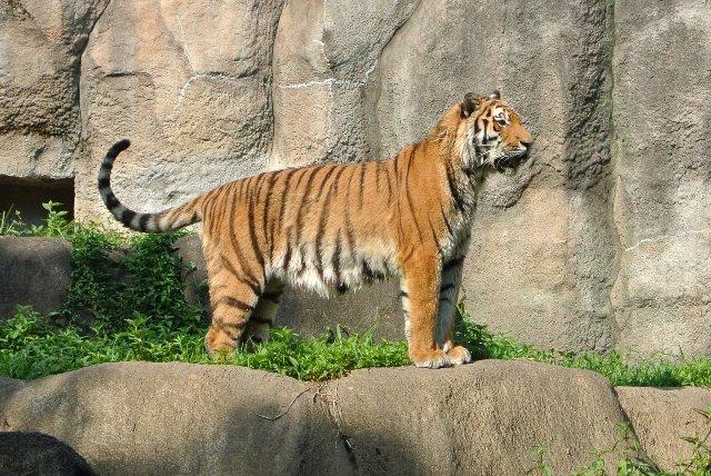 2012年10月8日に誕生した、浜松動物園の人気者です。