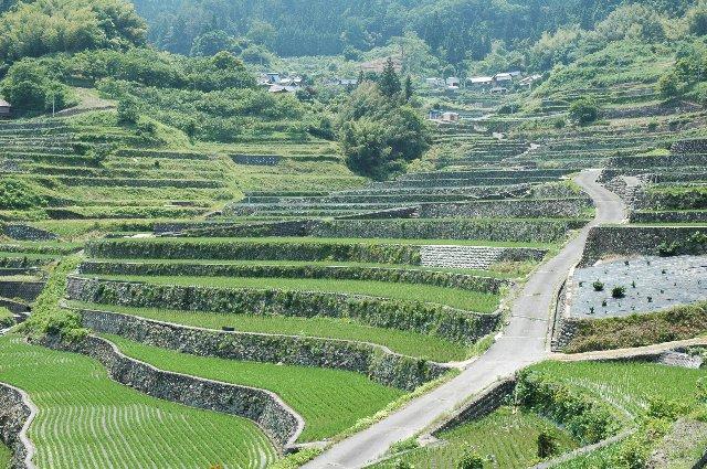 中四国には棚田の畦を石垣で組み上げた手の込んだ場所があり、井仁の棚田もそんな棚田の一つ。
