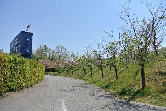 並木になっている道は歩いていて気持ちが良い。