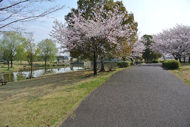桜並木の後方は池が作られていて、市民の憩いの場になっている。