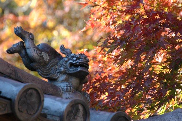 小諸・上田エリアで紅葉の名所として名高い懐古園。評判を違わず、美しい秋の風景を堪能できた。