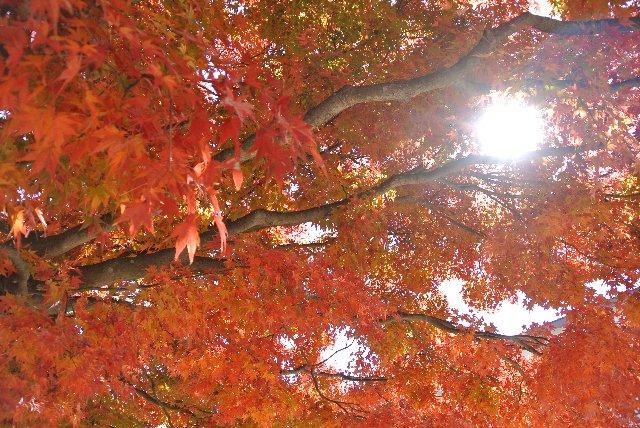 龍岡城跡は小学校になっていて、歴史的遺構で学べる子供達、こんな美しい木に守られて学べる子供達が羨ましい。