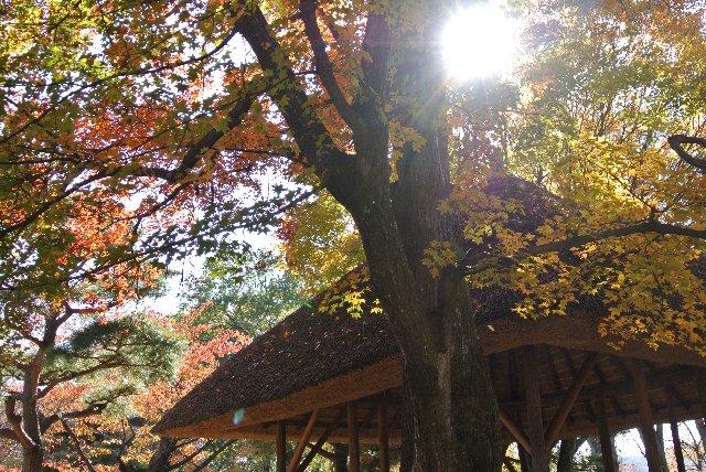 紅葉って、それだけを撮っても良い画像になりづらいので、この庵のような建造物があると良い絵になり易いですね。