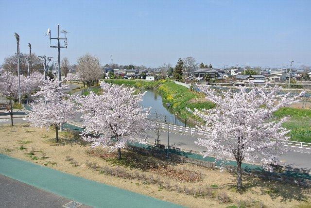 小川べりの菜の花が良いアクセントになっている。