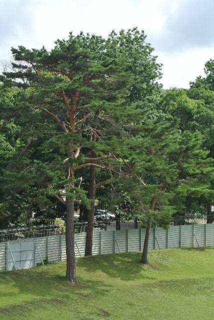 規模は違いますが、熊本藤崎台球場を彷彿とさせます。
