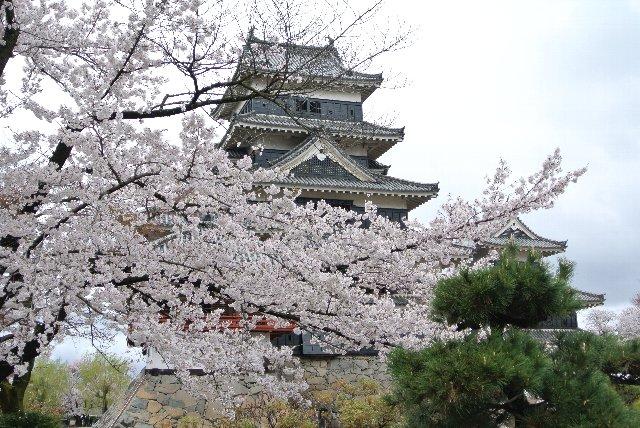 お城と桜の画像を楽しみたい方は、620円の入園料を払いましょう(笑)。