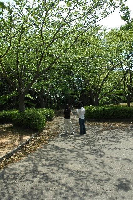 木立の途中からは、住宅地越しに海が見えて、気持ちの良い散歩道です。