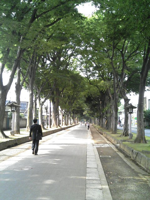 大宮駅からスタジアムまでは徒歩20分ほど。商店街を抜け、参道に入るとこんな素敵な道が現れる。