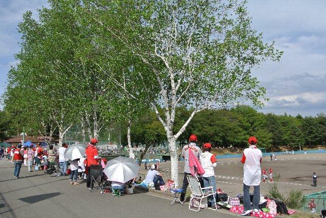 観戦エリアに白樺並木がある球場って、珍しい。