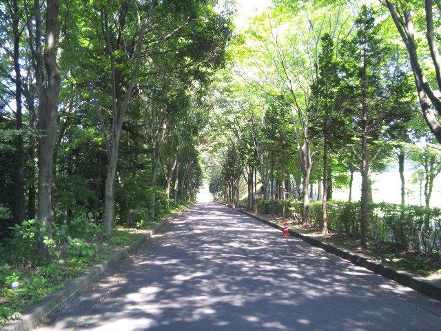 県道側(体育館側)から野球場へ向かって下りていく時、並木道の緑が鮮やかで美しかった。