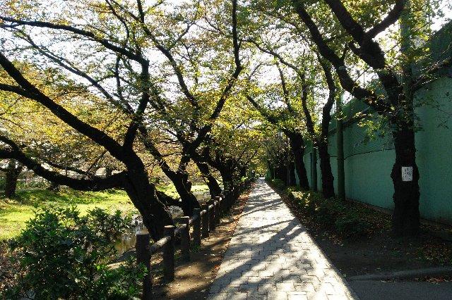 散歩をしたり、サイクリングをしたり、憩いの場になりそうな遊歩道。