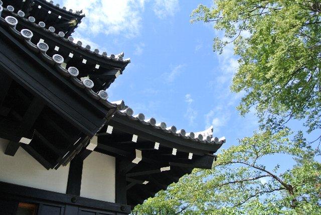 桜だけではなく東洋一と言われる蓮池が城址公園内にあります。