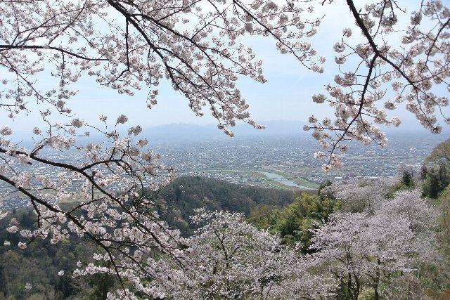 桜並木越しに高岡市街を望む。
