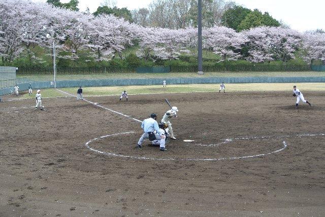 試合前には満開だった桜が、試合後には散り始めていた。