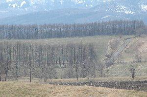 いつも被写体になってくれる楡の木のすぐそばで撮影。