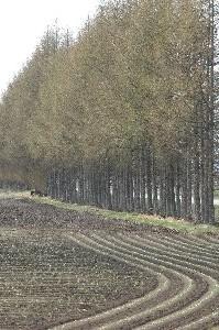 防風林と耕作した曲線の軌跡が素敵です。
