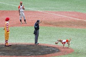 始球式に登場したのはドナルドでした。何故か日本語話してましたが(笑)。