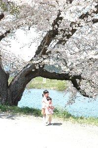 老若男女問わず、この桜の下ではとびきりの笑顔を作れます。