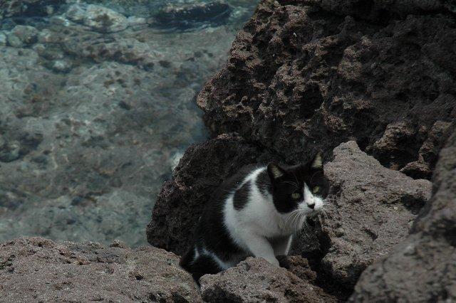 ここ結構な断崖絶壁なのですが、臆することなく下りていったこの猫は一体...。
