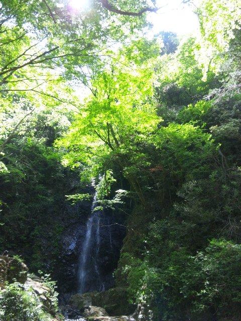 今日に関しては、水量が少なくなった滝よりも、今が旬の新緑の方に目が移った。