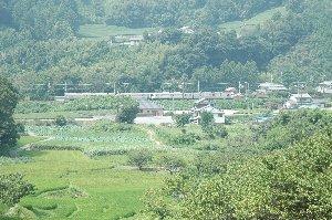 棚田が広がる山と、茶畑が広がる山との間を東海道線の電車が駆け抜けていく。