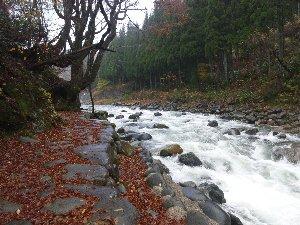 宿の裏に下りて、川沿いに散策することもできます。