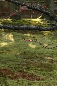 兼六園の一角に梅園があり、一足早い春を楽しむことができます。