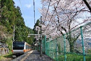 梅園への最寄駅であるが、駅構内には立派な桜の木もある。
