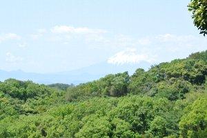 湘南海岸や海越しに大島も望むことができる。