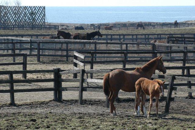 白老ファームは競走馬の生産牧場、競馬ファンには知られた存在らしい。