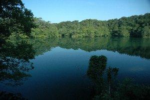とりわけて有名な沼ではないのですが、朝の柔らかい日差しを受けて鏡になった静かな沼に心惹かれた。