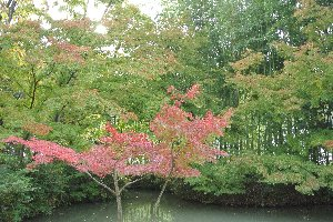 こういううっすらと色づいた木々もまた趣がありますよね。