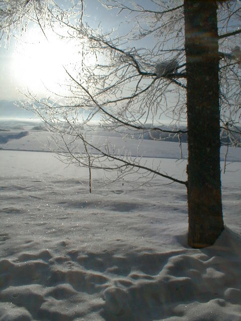 仕事で訪れた割には、むっちゃ冷え込んだ快晴の朝。町全体が霧氷に包まれていた。