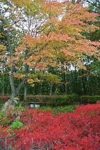 原P.A.は標高が約1000メートル、下界よりも早く紅葉が進みます。