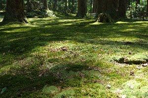 新緑の緑、苔の深緑がこの森の美しさを増している。