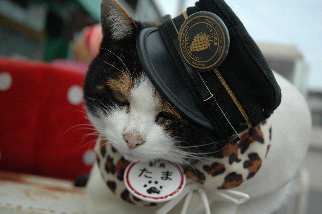 人間の都合で生かされて、猫の一生としては不満足だったでしょうが、あちらでは自由に野山を駆け回ってください。