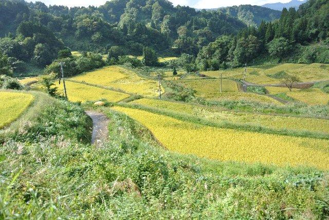 奥行きが広く、畦道が良いアクセントになっている。