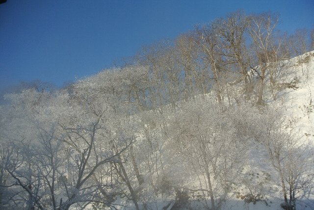 新館の露天風呂からは温泉の湯気で樹氷とかした木々を楽しむことができる。
