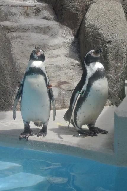 ペンギン舎、探したよぉ。まさか建物の外にあるとは...。