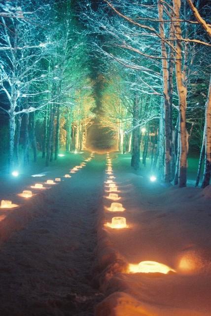 マイナス20度のライトアップされた森は幻想的ですよ。