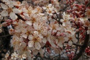 早咲きの桜も見つけられました。