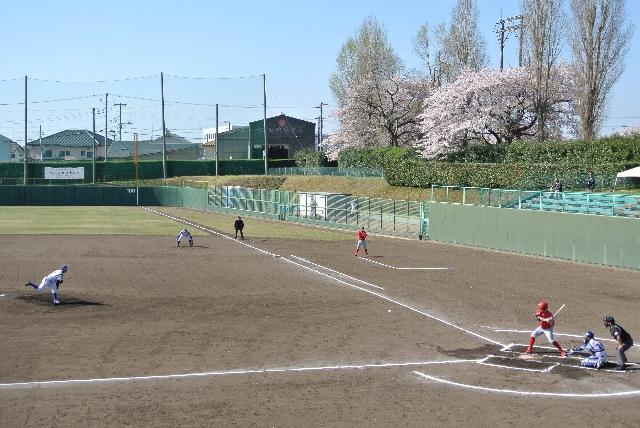 桜の花びらが舞う中での実戦、あまり無い機会ですよね。
