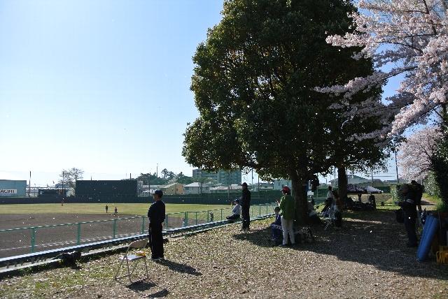 ついつい視線がグラウンドから桜の木のほうへ向いてしまう。