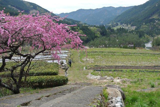 所々に山桜とか花桃が咲いていて、のどかさを倍増させていた。