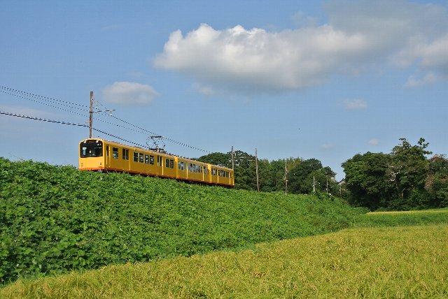 狭い線路幅を通る電車は、小さくてむっちゃかわいい