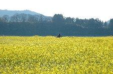 バイクなら畑に乗り入れて、こんな写真も撮れます。 撮影日:2007/04/29