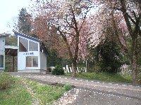車で通っていて「ををっ」と思う桜の小駅。