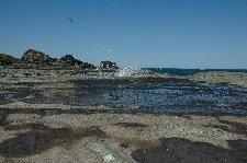 風が強いと頭から潮を被りそうな感じ。